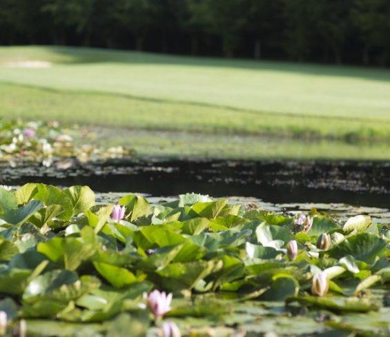 Crondon Park Lake on Golf Course